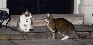 Министерство иностранных дел Великобритании отказало знаменитым в стране коту Ларри и кошке Фрейе в свободном посещении своего офиса.