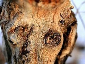 Нечистая сила навечно обратила героя в дерево