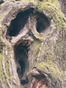"""Дерево напоминает персонаж из фильма """"Крик""""."""