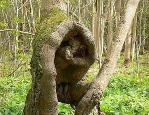 Лесовичок укрылся в надёжное укрытие