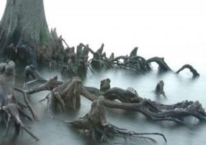 Страшное дерево с корнями, похожими на людей, пленённых нечистой силой