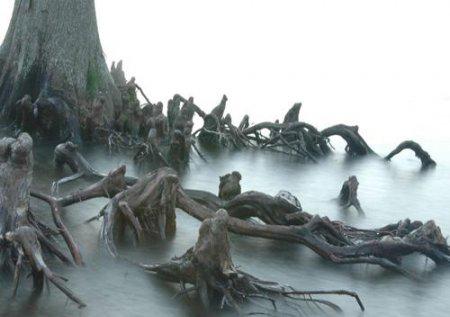 Страшное дерево с корнями похожими на