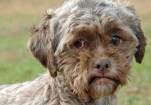 Собака с человеческим лицом из приюта штата Кентукки