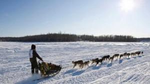 """""""Айдитарод"""" - величайшие гонки на собачьих упряжках в Аляске."""
