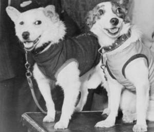 Собаки-космонавты и первый полёт человека в Космос.