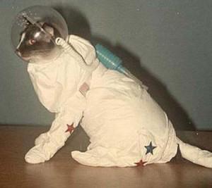 Животные в Космосе.