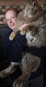 Гигантский кролик скоро будет рекордсменом книги рекордов