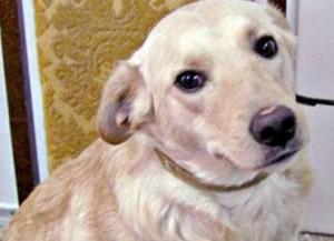 В Беларуси теперь есть своя собака-миллионер.