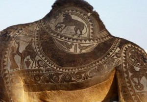 Искусство украшения домашних верблюдов