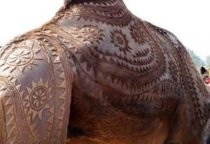 Восточное искусство украшения верблюдов