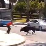 Как простой прохожий справился с быком. Видео.