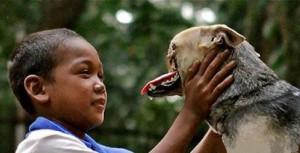 Героическая собака вернулась на родину после лечения в Америке