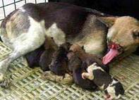 Героическая собака вернулась на родину после лечения в Америке.