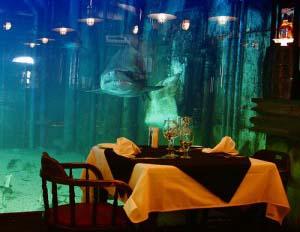 Хотите поужинать под пристальным взглядом акулы?