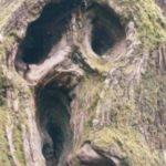 Страшные деревья заставляют поверить в сказки о нечистой силе