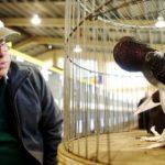 В городе Аделаида (Австралия) состоялась большая голубиная выставка, поразившая всех многообразием пород голубей