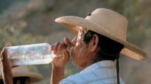 Текила. Алкогольный напиток из голубой агавы.