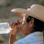 Текила. Алкогольный напиток из голубой агавы. + Видео