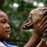Героическая собака вернулась на родину после лечения в Америке. + Видео