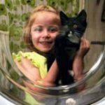 Котёнок остался в живых после стирки в течение часа в стиральной машине