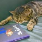 В Новороссийске кота Кузю официально приняли на должность помощника библиотекаря