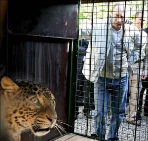 У «леопардов Путина» наконец-то появились котята.