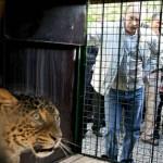 У «леопардов Путина» наконец-то появились котята