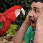 Как найти управу на матерящихся попугаев?