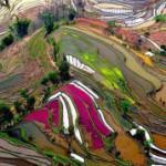 Китайские рисовые поля достойны настоящей кисти художника. + Видео