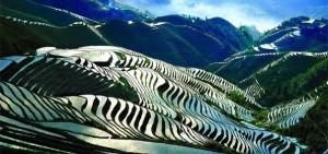 Китайские рисовые поля достойны настоящей кисти художника.