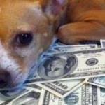 Богатая итальянка завещала собаке 2 миллиона евро