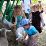 В России всё популярнее становятся контактные зоопарки