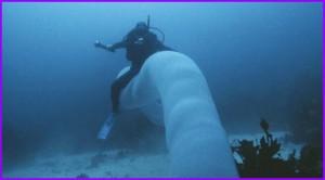 Встреча дайверов с редким обитателем глубин - морским единорогом