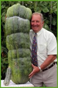Гигантские овощи. Во саду ли, в огороде