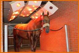Кремлевскую школу верховой езды можно назвать настоящим домом отдыха для лошадей.
