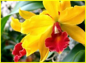 Согласно легендам, орхидеи – это «осколки» радуги.