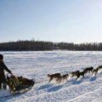 «Айдитарод» — величайшие гонки на собаках в Аляске.