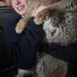 Гигантский кролик скоро станет рекордсменом книги рекордов Гиннеса