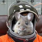Погибла большая часть животных с российского спутника «Бион-М», вернувшегося на Землю после месячного космического полёта