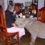 В Зимбабве пенсионерка воспитала домашнего носорога
