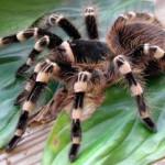 Смертельный яд пауков в борьбе с болью.