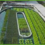 Аквапоника – единая система выращивания пресноводных животных и сельскохозяйственннных культурных растений. Видео
