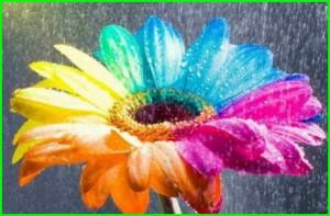 В Голландии  садоводы научились создавать радужные цветы. Красивые фото