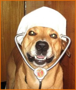 Уникальный нюх собак позволяет диагностировать некоторые разновидности рака.