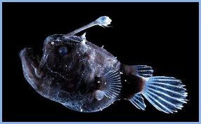 Биолюминесценция. Ночное свечение морей и океанов.