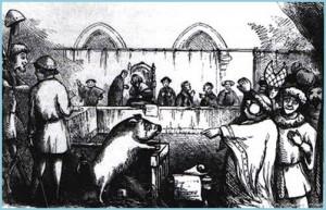 Известные в истории факты привлечения представителей мира животных к суду.