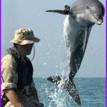 Дельфины и морские львы на военной службе (первая часть).
