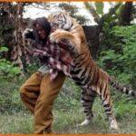 В Индонезии мужчина приручил тигра и теперь проводит со зверем опасные тренировки. Крутое видео.