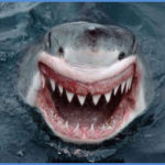 Учеными обнаружено сходство в поведении серийных убийц и акул.