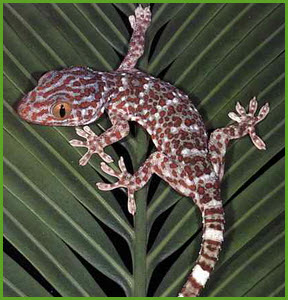 Ящерицы гекконы помогли ученым создать эффективный материал «обратимый сверхклей»